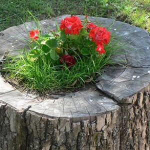 Как убрать пень от старого дерева на участке