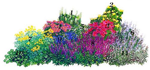 многолетняя клумба подбор растений схема