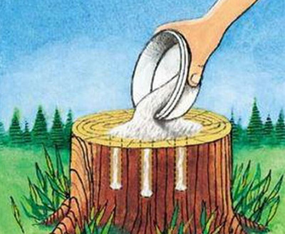убрать пень солью