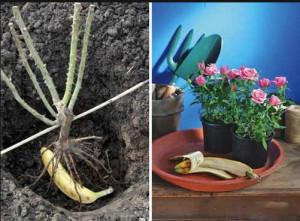Удобрения для сада и цветов из кухонных отходов