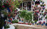 цветы в маленьком дворике