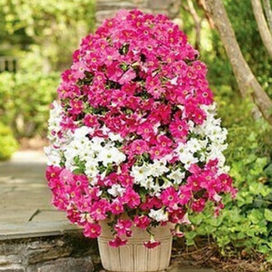 Вертикальная клумба из цветочного горшка и мусорного пакета